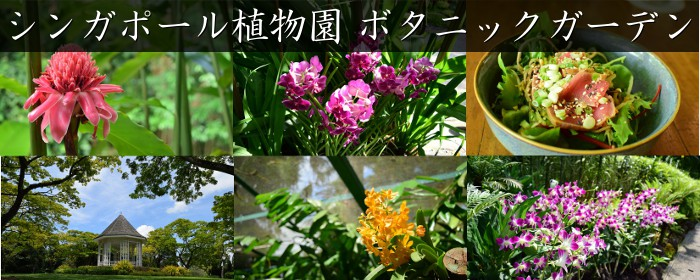 シンガポール植物園:ボタニックガーデン